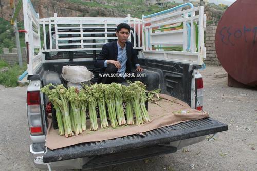 man selling Rubarb